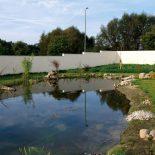 Teich zur Blumenwiese