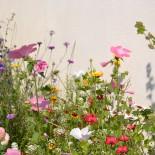 Blumenwiese im Portaleum