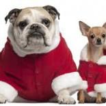 2 Hunde  Weihnachtsmann