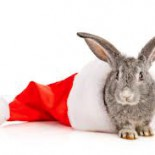 Hase Weihnachten