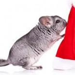 Maus Weihnachten