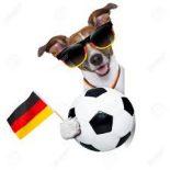 Hund EM 2
